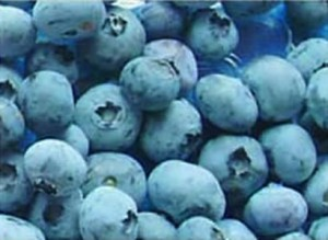 fro-blu